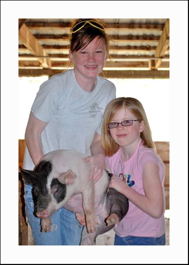 pigs-017