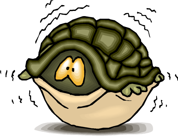 hiding-turtle